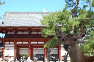 deer-193